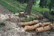Впіймали на «гарячому»: тернополянин незаконно зрізав дерева