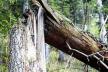У лісі на Тернопільщині сталася трагедія
