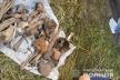 Знайшли рештки: на Тернопільщині встановлюють причину смерті зниклого юнака