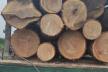 Незаконно перевозив деревину: на Тернопільщині затримали водія вантажівки