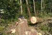 Вирубали дерев на понад мільйон гривень: на Тернопільщині затримали зловмисників
