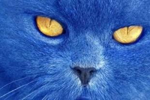 Відомий тернопільський священик став куратором гри «Синій кіт»