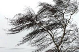 29 березня на Тернопільщині – сильний вітер
