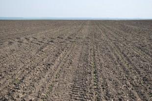 Агрохолдинг «МРІЯ» почав сіяти цукровий буряк