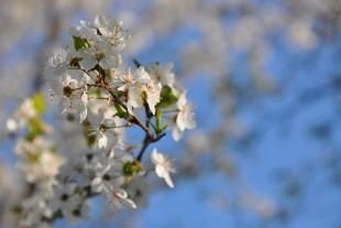 Весняна мандрівка заповідником «Тростянецькі джерела» (Фоторепортаж)