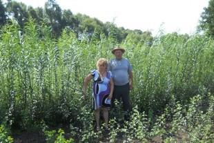 Аграрна Тернопільщина: Дрова, що ростуть на городі