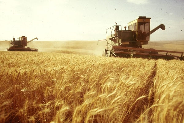 Аграрії Тернопільщини зібрали майже 400 тисяч тонн зерна