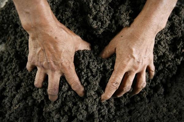 На Тернопільщині агропідприємство незаконно користувалось державними землями