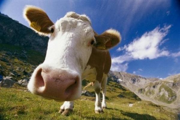 Забезпечать кормами і свиней, і корів, і птицю