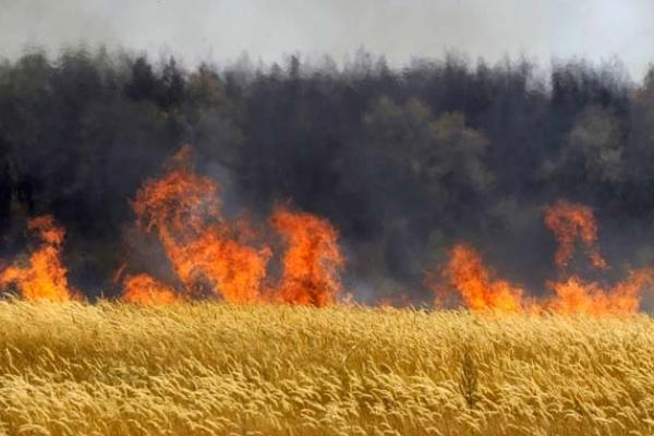 У с. Великі Гаї горіло пшеничне поле, полум'я спричинило втрату врожаю.