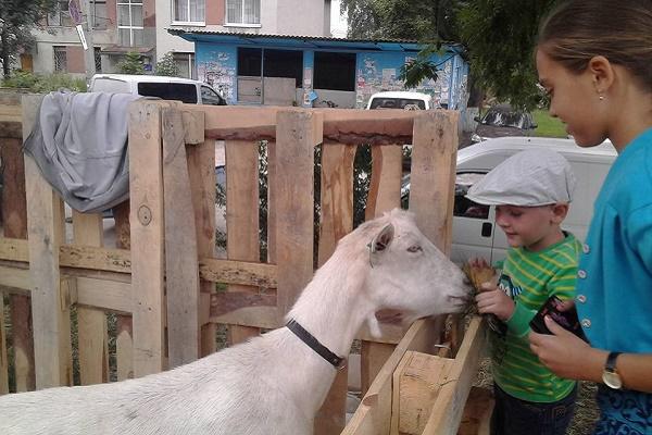 На Тернопільщині на Коза-фесті файно гуляли і люди, і кози