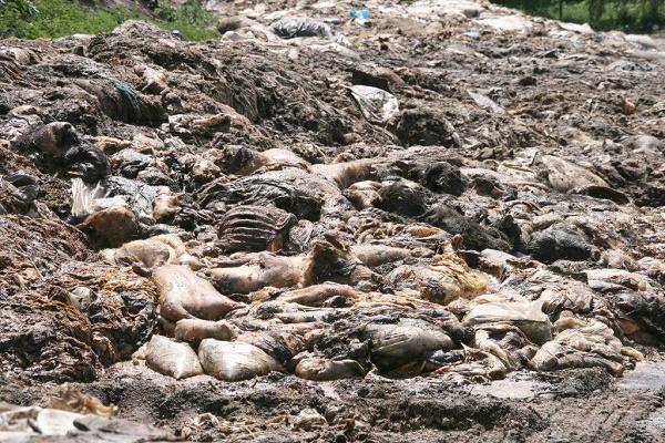 Екологічне лихо на Тернопільщині можна побороти, але за великі гроші