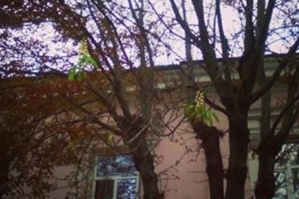 У Тернополі у вересні зацвіли каштани (Фото)