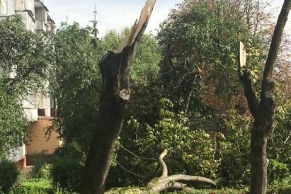 На вулиці Карпенка комунальники прибирають зламані негодою дерева (Фотофакт)