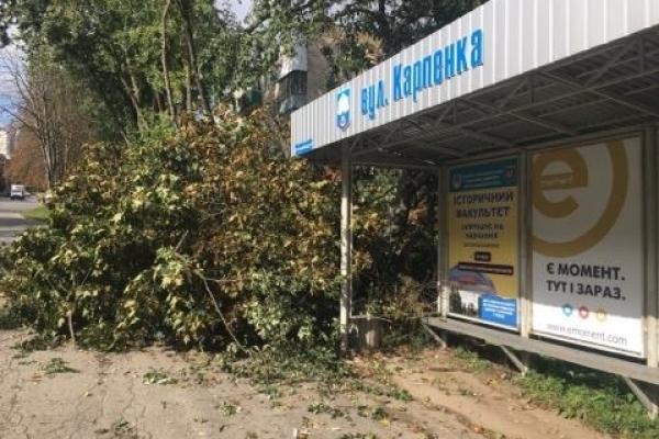 На вулиці Карпенка зламані буревієм дерева перекрили тротуар