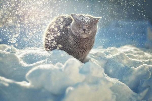 Жителям Тернопілля радять готуватись до найсуворішої зими за останні сто років
