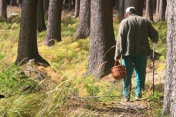 На Чортківщині чоловік пішов по гриби і в нього стався інсульт