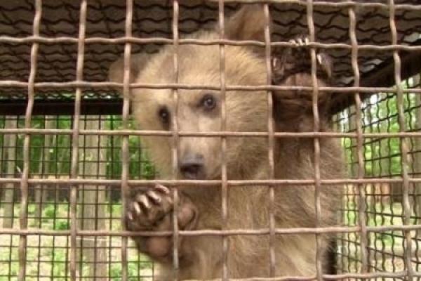 Тернопіль долучиться до маршу за права тварин