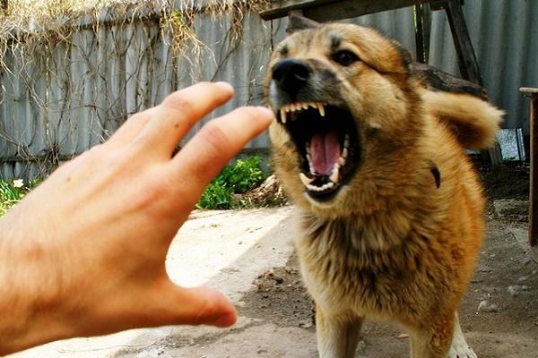 У Тернополі собака покусала дитину (Фото)