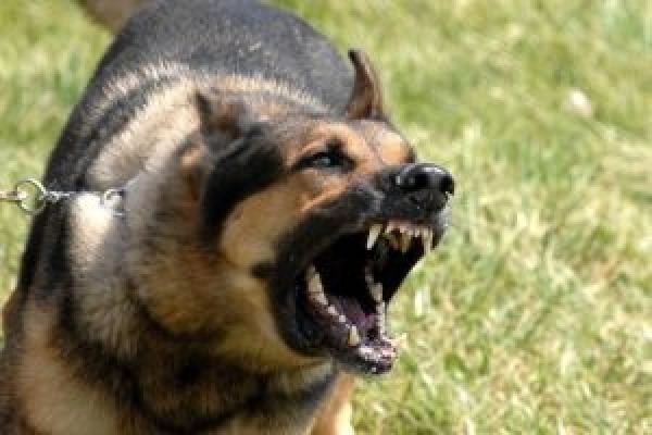 Труп скаженої собаки, яка покусала жінку у Кременці, спалили