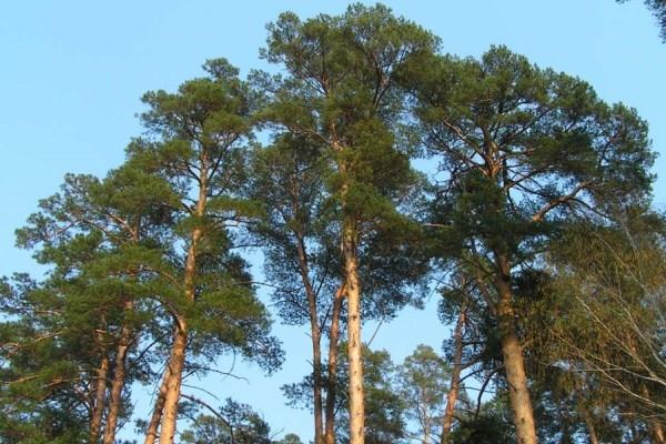 Самовільну вирубку дерев у Кременецькому районі розслідують правоохоронці