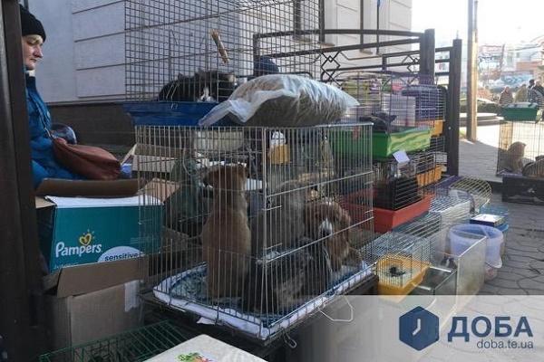 Тернопіль: тварини, яких продають «під банком», масово вмирають, випадків десятки (Фото, Відео)