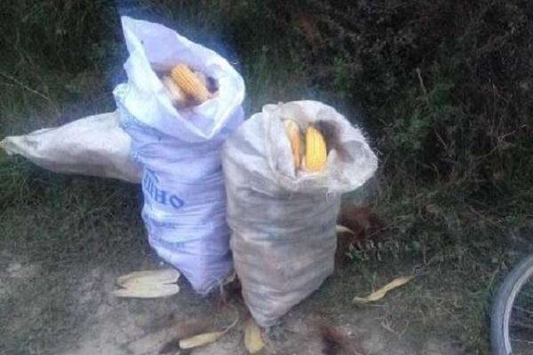 На Тернопільщині злодії полюють на врожай