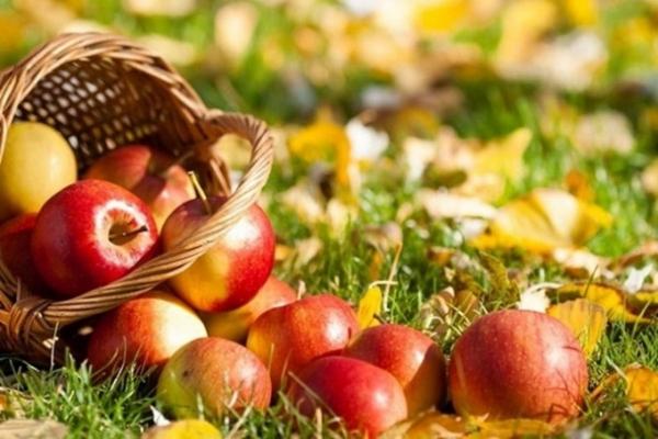 Аграрна Тернопільщина: Успішне п'ятиріччя ФГ «Газд»