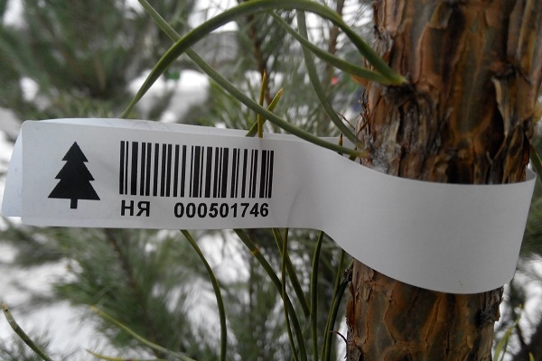 Тернополян закликають купувати новорічні ялинки зі  штрих-кодами
