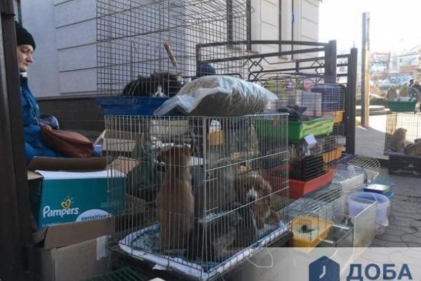 «Концтабір» для тварин в Тернополі діє на Шептицького (Фото, відео)