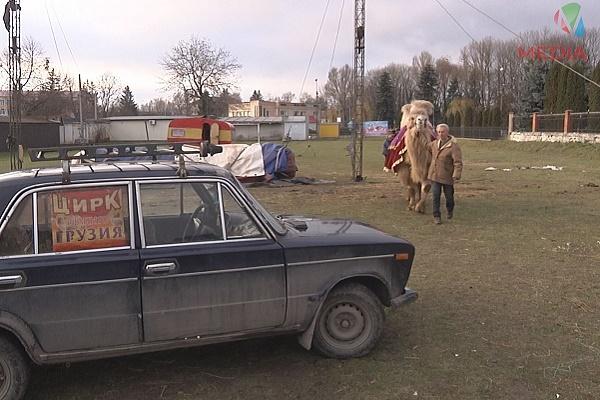 Верблюд, якого «забули» у Хоросткові, розважатиме діток на новорічні свята (Відео)