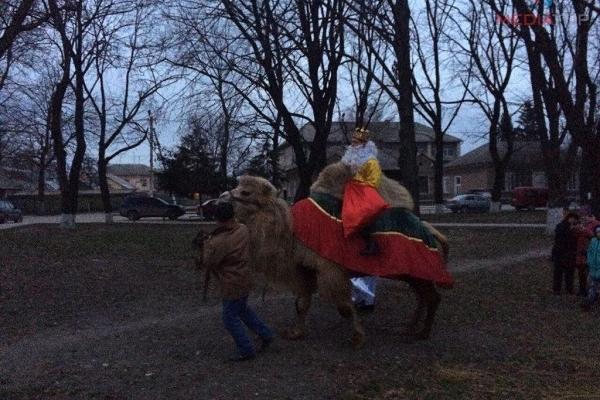 Верблюд, якого «забули» на Тернопільщині, став помічником Миколая