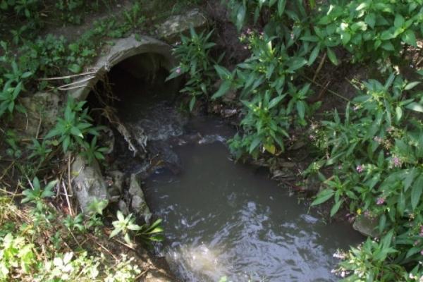 Тонни сміття потрапляють у Тернопільське озеро через підземну річку  (Відео)