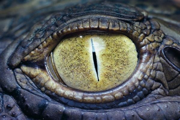 Важливо на сітківці чиїх очей ти зараз відображений