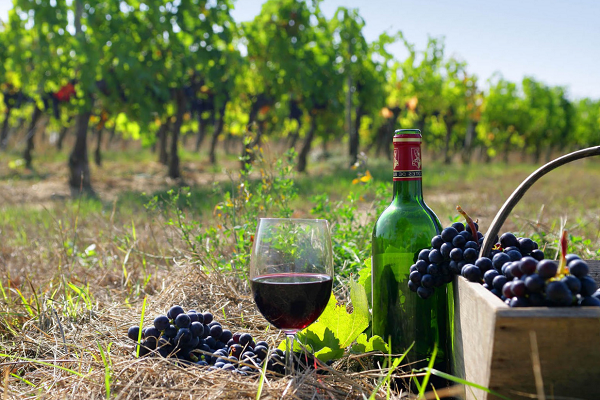 На зелених шляхах Придністер'я розвиватимуть винний туризм