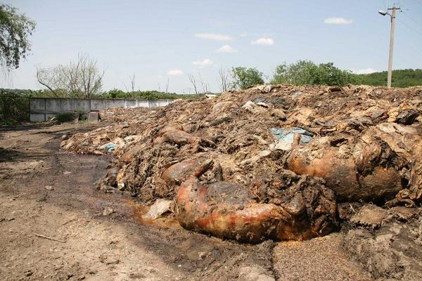 На Тернопільщині нарешті утилізують загиблих тварин, які ледь не спричинили екологічну катастрофу (Фото)