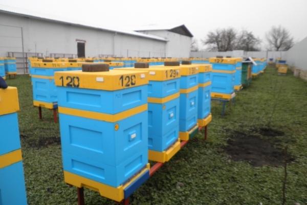 Бджолярі Тернопільщини об'єдналися у спілку (Фото)