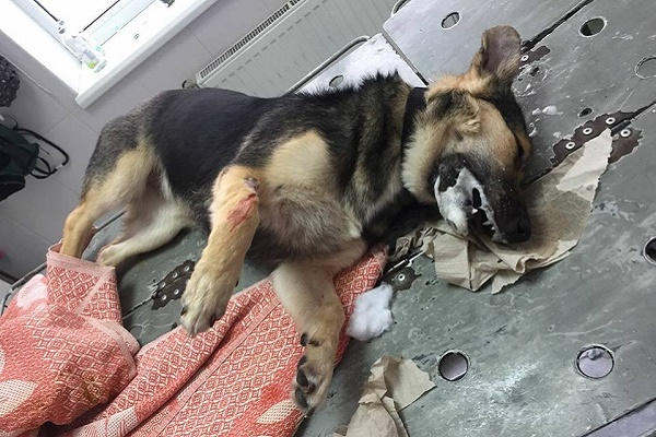 У Тернополі нелюди продовжують вбивати собак (Відео 18+)