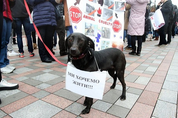 У Тернополі розстрілюють та труять безпритульних тварин, люди йдуть на протест