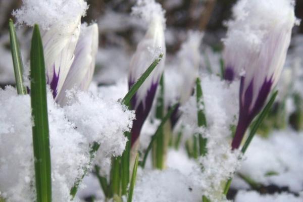 Весна ще зачекає: В Україну повертаються морози