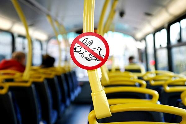 Скільки штрафу заплатять «зайці» у тернопільських маршрутках?