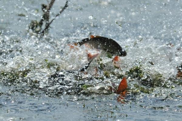На Тернопільщин затримано браконьєрів з уловом більше 100 кілограм (Фото)