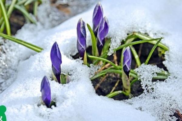 У центрі Києві «знайшли» весну (Фото)