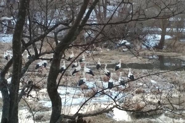 Тернополяни, які їхали на допомогу лелекам - самі потрапили у пастку