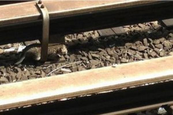 У Тернопільській області два вагони поїзда зійшли з рейок через крадіжку елементів колій