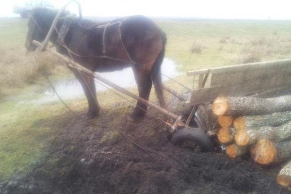 В селі на Тернопільщині чоловік загинув, впавши з підводи