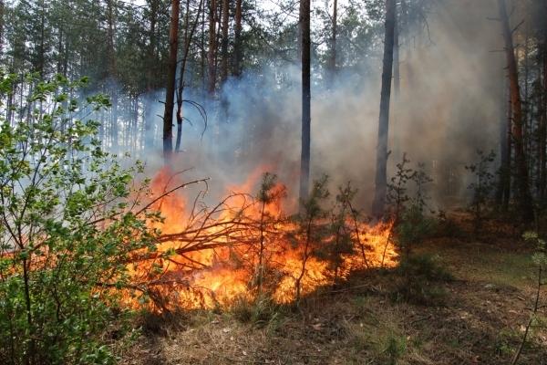 На Тернопільщині приборкували лісову пожежу (Фото)
