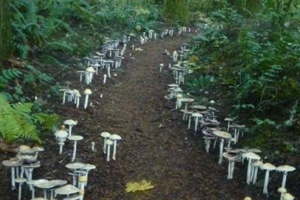 Як шукати помежи поганок добрих грибів