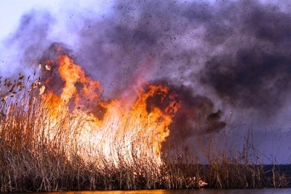 На Тернопільщині згоріло 3 гектари очерету