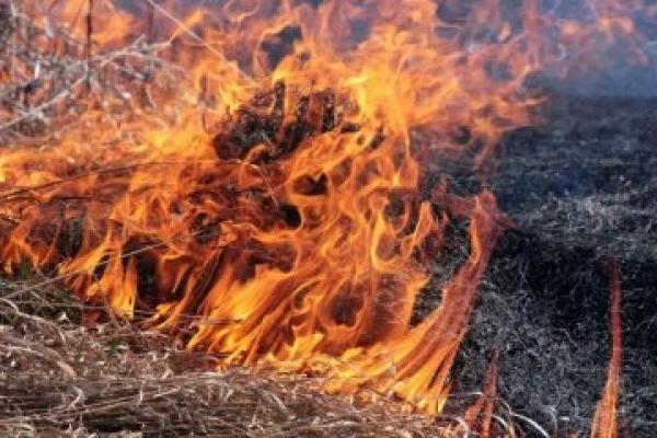 У Збаразькому районі ледь не згоріло 10 гектарів посівів кукурудзи